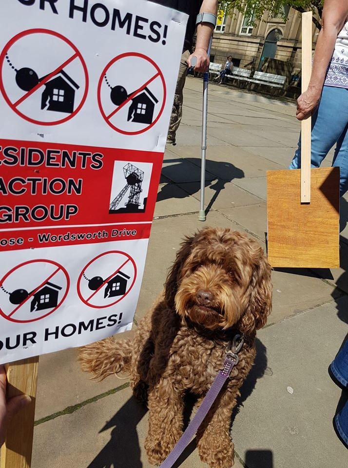 Dog and billboard
